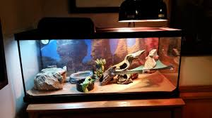 Zoo Med Lighting by I U0027m Not Sure If This Is A Correct Setup U2022 Bearded Dragon Org