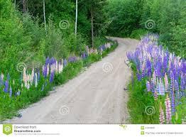 swedish country road stock photo image 41879268