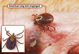 Can Bed Bugs Live On Cats Fleas Ticks Pets And What To Do In Pictures