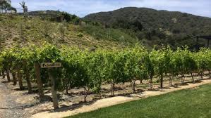 my home vineyard u2013 a beautiful custom home vineyard