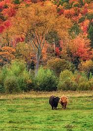 hampshire fall foliage season projection visitors