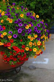 114 best garden container images on pinterest garden