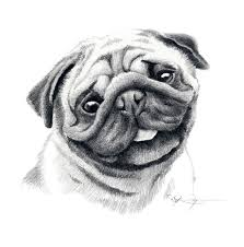 pug dog pencil drawing art print signed by artist dj rogers