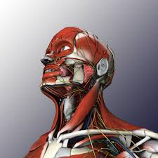 Interactive 3d Anatomy The Biodigital Human Exploring Health In 3d