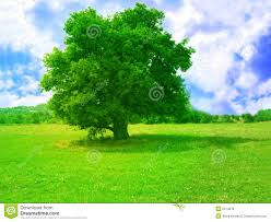 green tree stock image image of ecosystem field afternoon 2514279