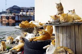 latest list of cat islands in japan japan travel market entry