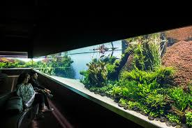 amano aquascape temporary exhibition 盪 exhibitions 盪 ocean磧 de lisboa