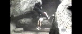 Brookfield Zoo Halloween by Gorilla Carries 3 Year Old Boy To Safety After He Fell Into