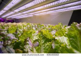 hydroponic farm stock photo 113691094 shutterstock
