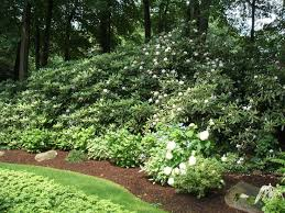 Ideas For Backyard Landscaping 25 Beautiful Hedges Landscaping Ideas On Pinterest Hedges