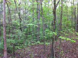owner financed land for sale in georgia ga hurdle land and