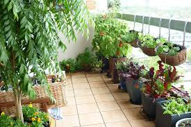 Ideas For Balcony Garden Small Balcony Garden Ideas Planted With Various Of Plants And
