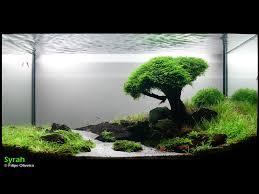 Beautiful Home Fish Tanks by Wow Now That Is A Cool Aquarium Magnifique Aquarium J U0027aimerais