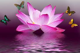 butterfly lotus flower free image on pixabay