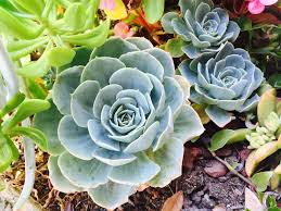exles of succulent plants 28 images 40 beautiful exles of