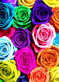roses colors rainbow colored flowers home design flower pictures color mamak