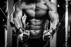 bodybuilding images u0026 stock pictures royalty free bodybuilding