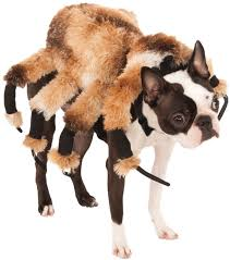 scary halloween giant spider dog costume costume craze