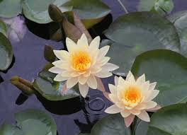Flower Delivery San Angelo Tx - san angelo texas bordellos to waterlilies and everything in between