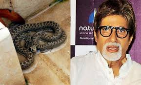 Snake In The Backyard by Snake Found Inside Amitabh Bachchan U0027s Home In Mumbai