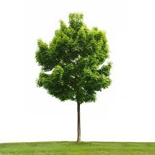 your home based business is like a tree clements
