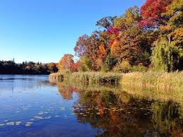 fall colors by the lake picture of high park toronto tripadvisor