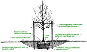 tree planting tips