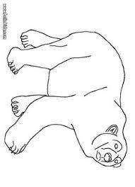free printable polar bear template geography antarktis alaska