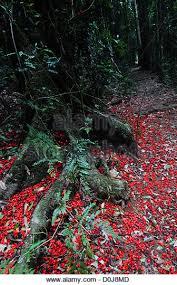 flowers around tree stock photos flowers around tree stock