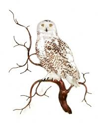 bovano w8092 snowy owl on tree branch by the bay gallery