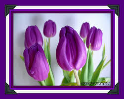 Pretty Vase Flower Purple Tulips Flowers Pretty Vase New Flower Desktop