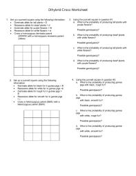 Dihybrid Cross Punnett Square Worksheet Punnett Square Dihybrid Worksheet 2015