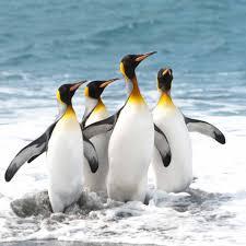 antarctica holidays natural world safaris