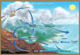 the carbon cycle article ecology khan academy