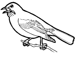 bird coloring pages 286220 coloring pages for free 2015
