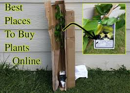 best places to buy plants seeds