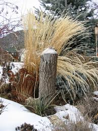 master gardeners u0027 tips for winter interests mentor public library