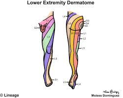 Dermatomes Map Dermatomes Step1 Neurology Step 1 Medbullets Com