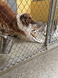 veterinary pet floor resists odors stains u0026 germs