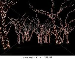 trees white lights image photo bigstock