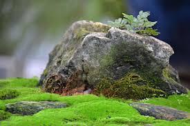 bonsai rock photographs page 8 of 14 fine art america