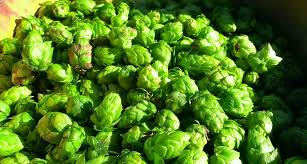 mighty axe hops releases free minnesota hops grower u0027s guide
