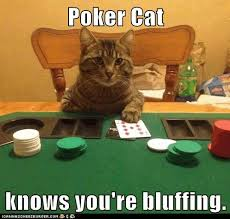 Cat Meme Generator - poker cat meme generator best casino online