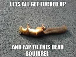 Dead Squirrel Meme - squirrel meme funny and crazy squirrel pictures