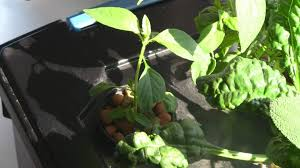 how to build a windowsill hydroponic herb garden part 2 of 2