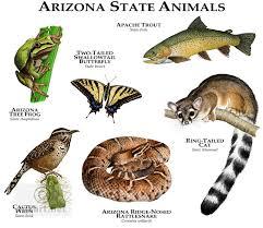 mammal clipart arizona state pencil and in color mammal clipart