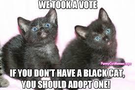 Kittens Memes - kittens took a vote funny kitten meme