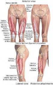 Beauty Therapy Anatomy And Physiology 251 Best 12 Anatomy And Physiology Images On Pinterest