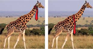 Tie Meme - what is the giraffe tie meme popsugar tech