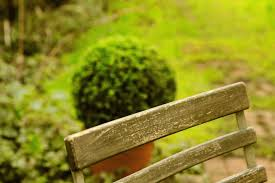 modern country style how to use topiary in a modern country